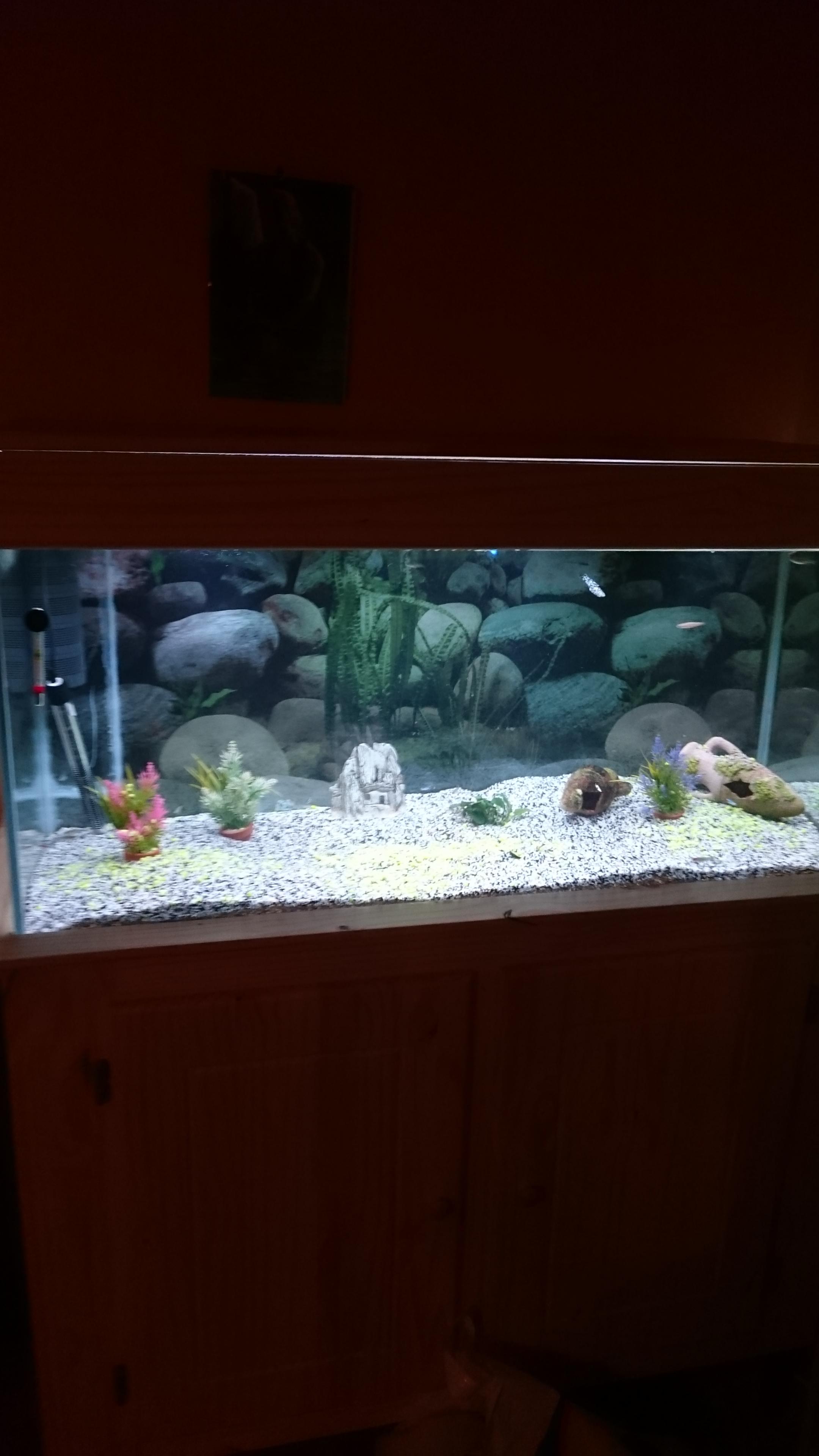 http://kimikooo.free.fr/Aquarium/DSC_0163.JPG