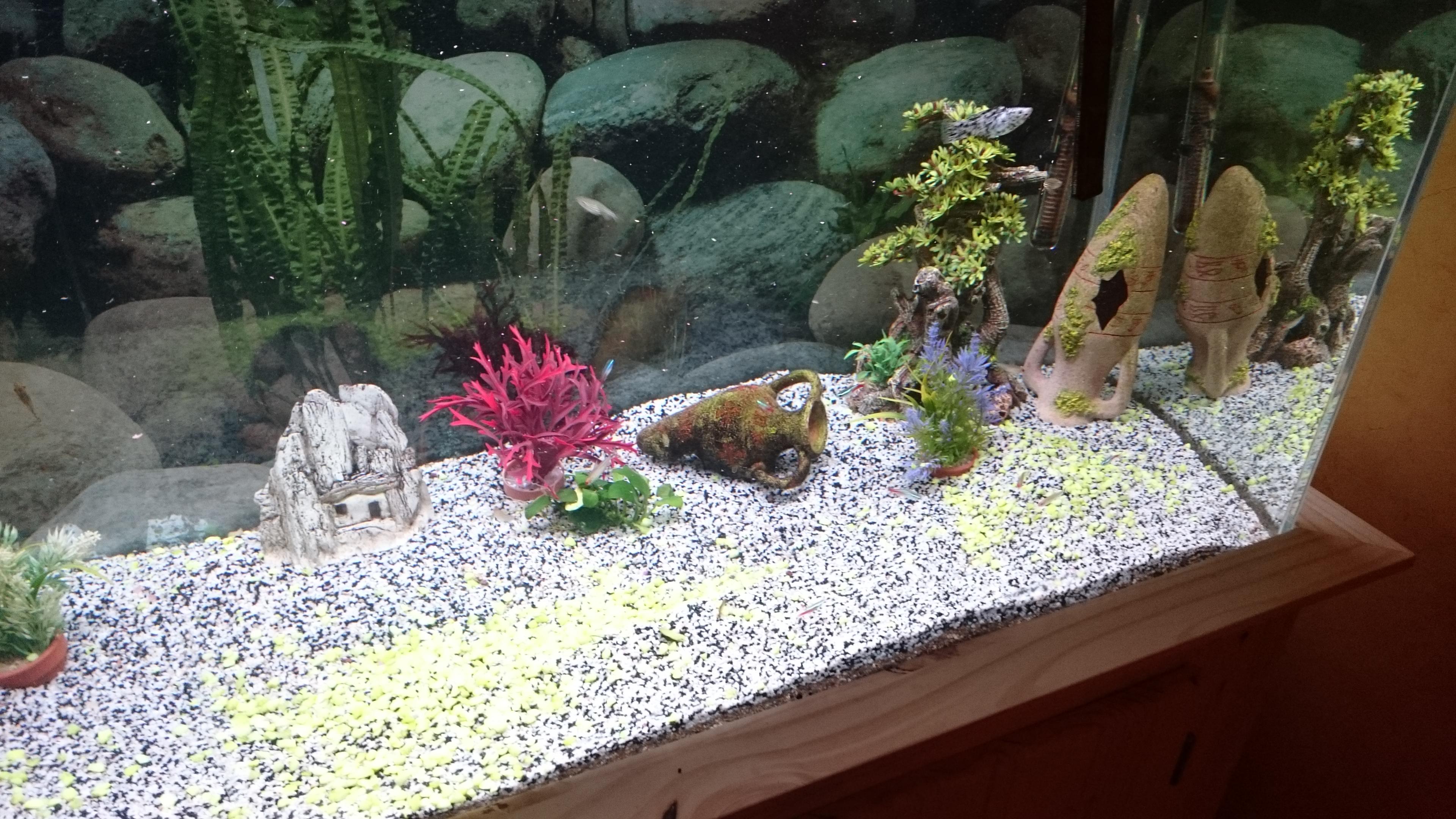 http://kimikooo.free.fr/Aquarium/DSC_0171.JPG