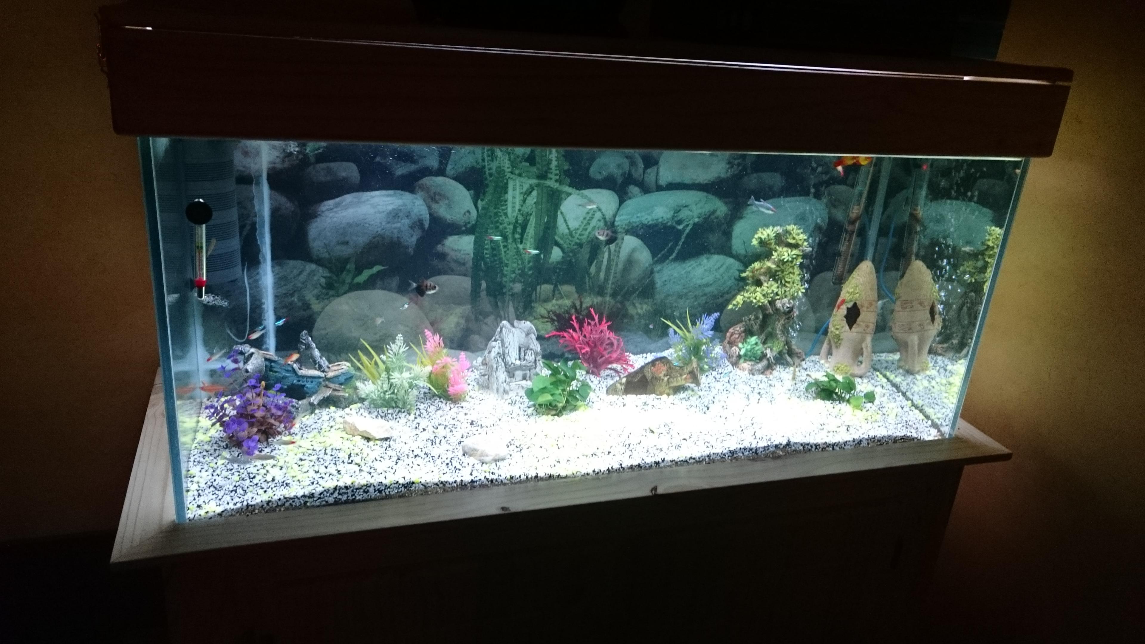 http://kimikooo.free.fr/Aquarium/DSC_0210.JPG