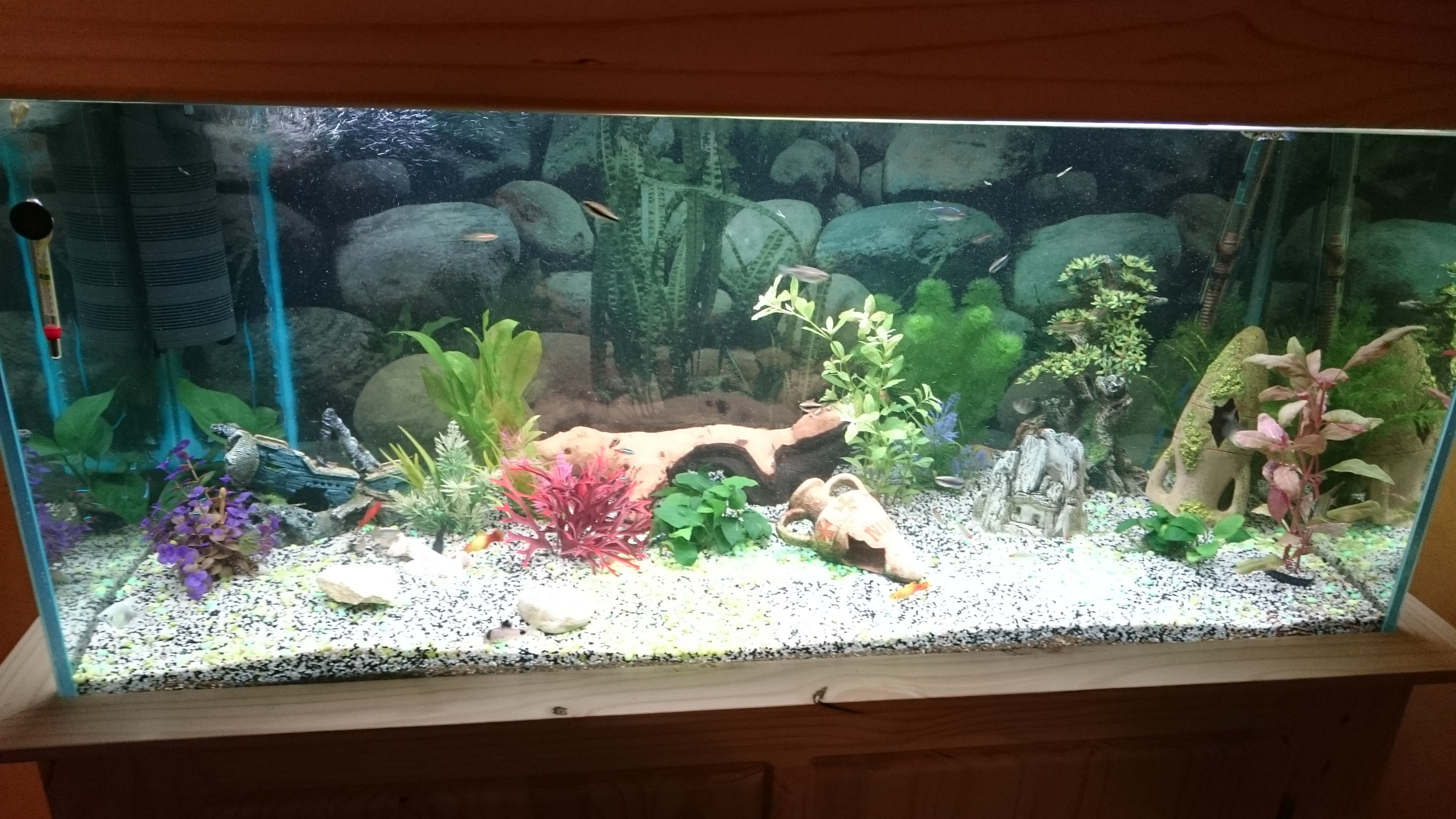 http://kimikooo.free.fr/Aquarium/DSC_0223.JPG