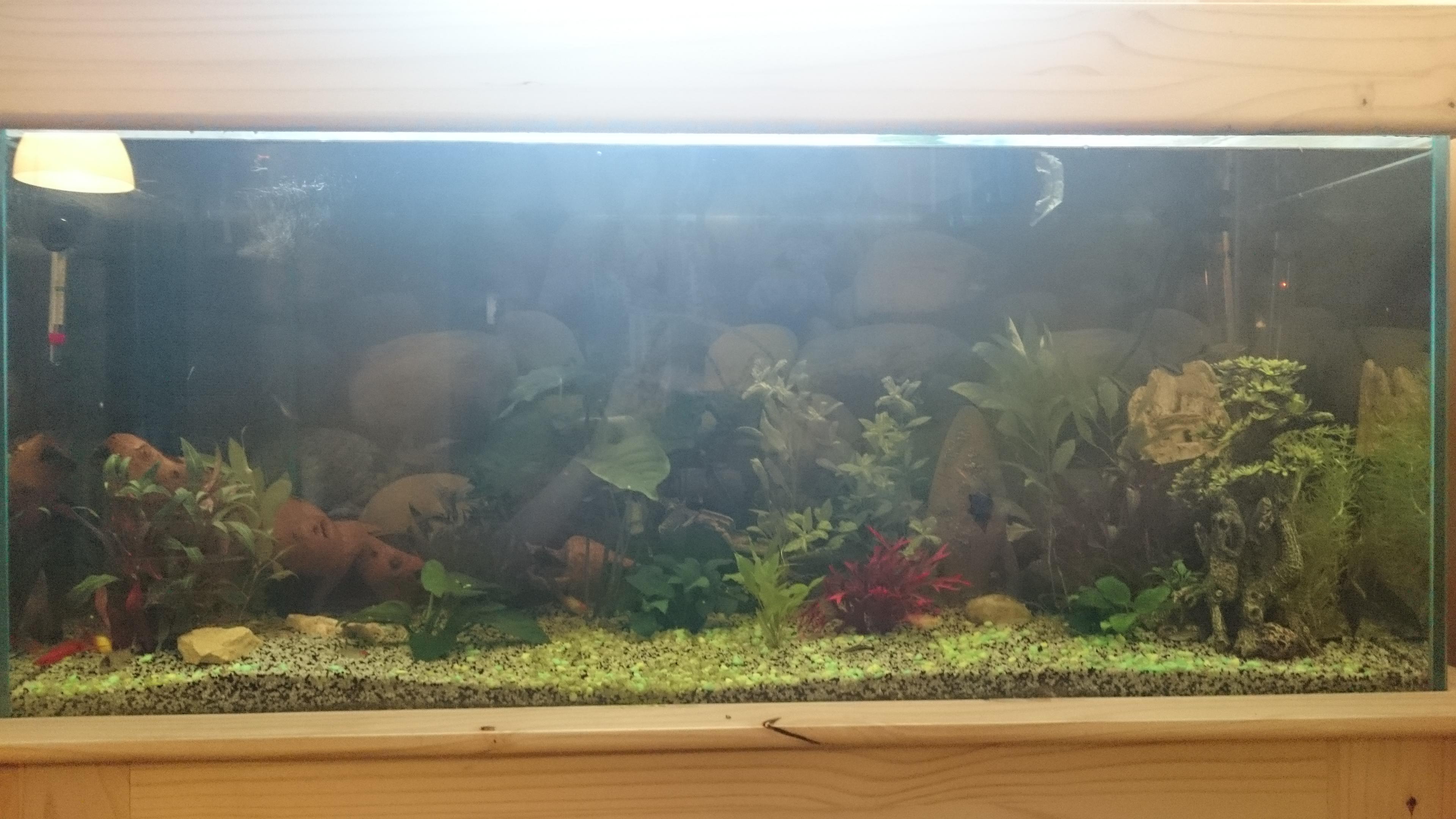 http://kimikooo.free.fr/Aquarium/DSC_0259.JPG