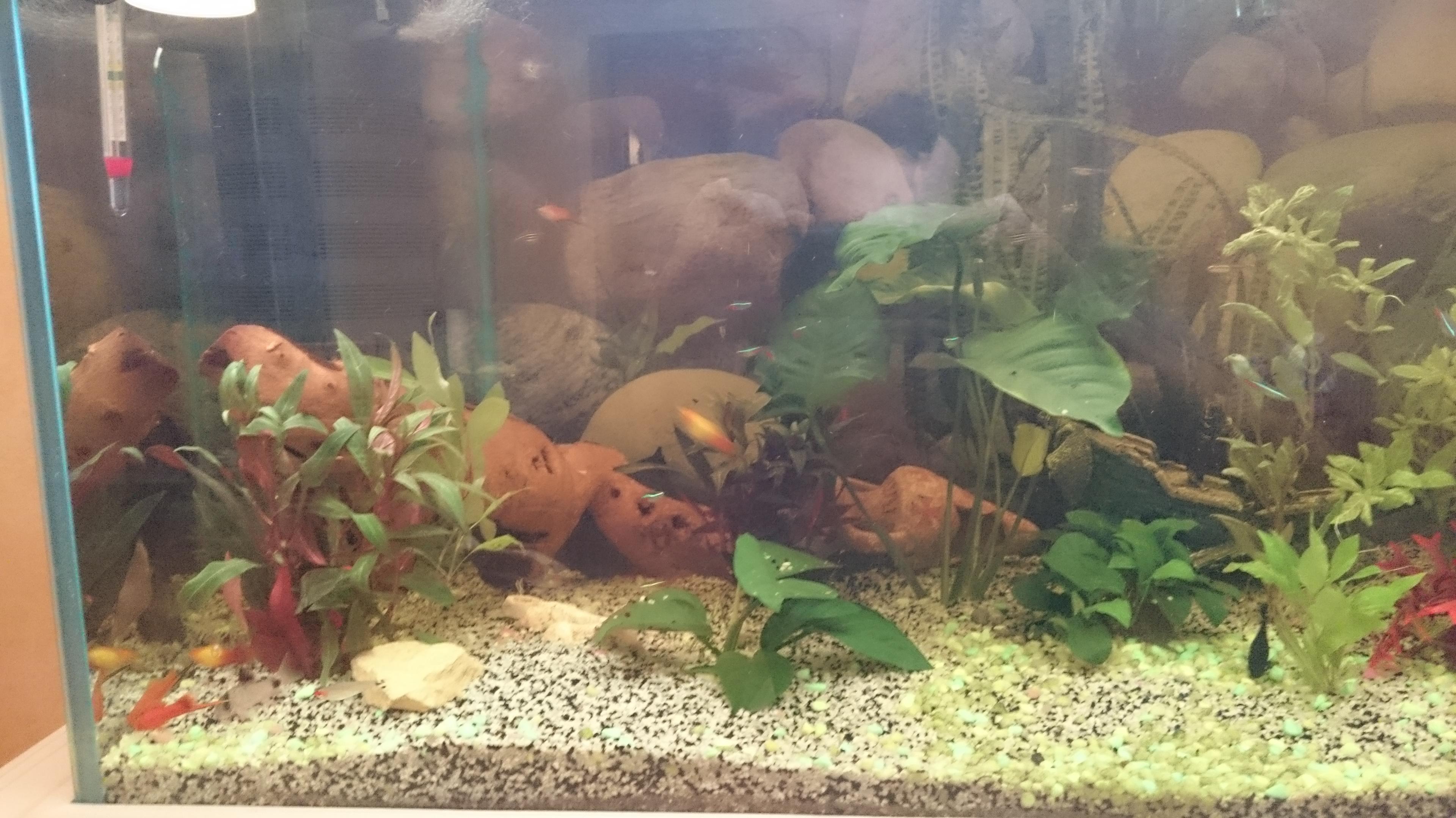 http://kimikooo.free.fr/Aquarium/DSC_0260.JPG