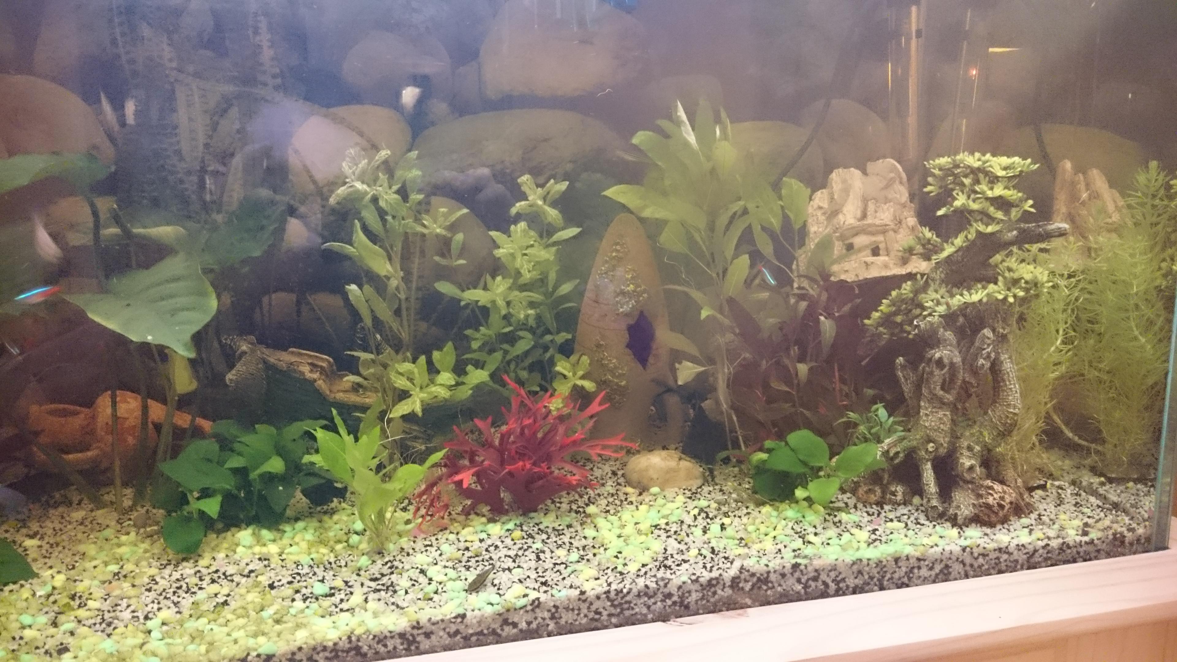 http://kimikooo.free.fr/Aquarium/DSC_0261.JPG