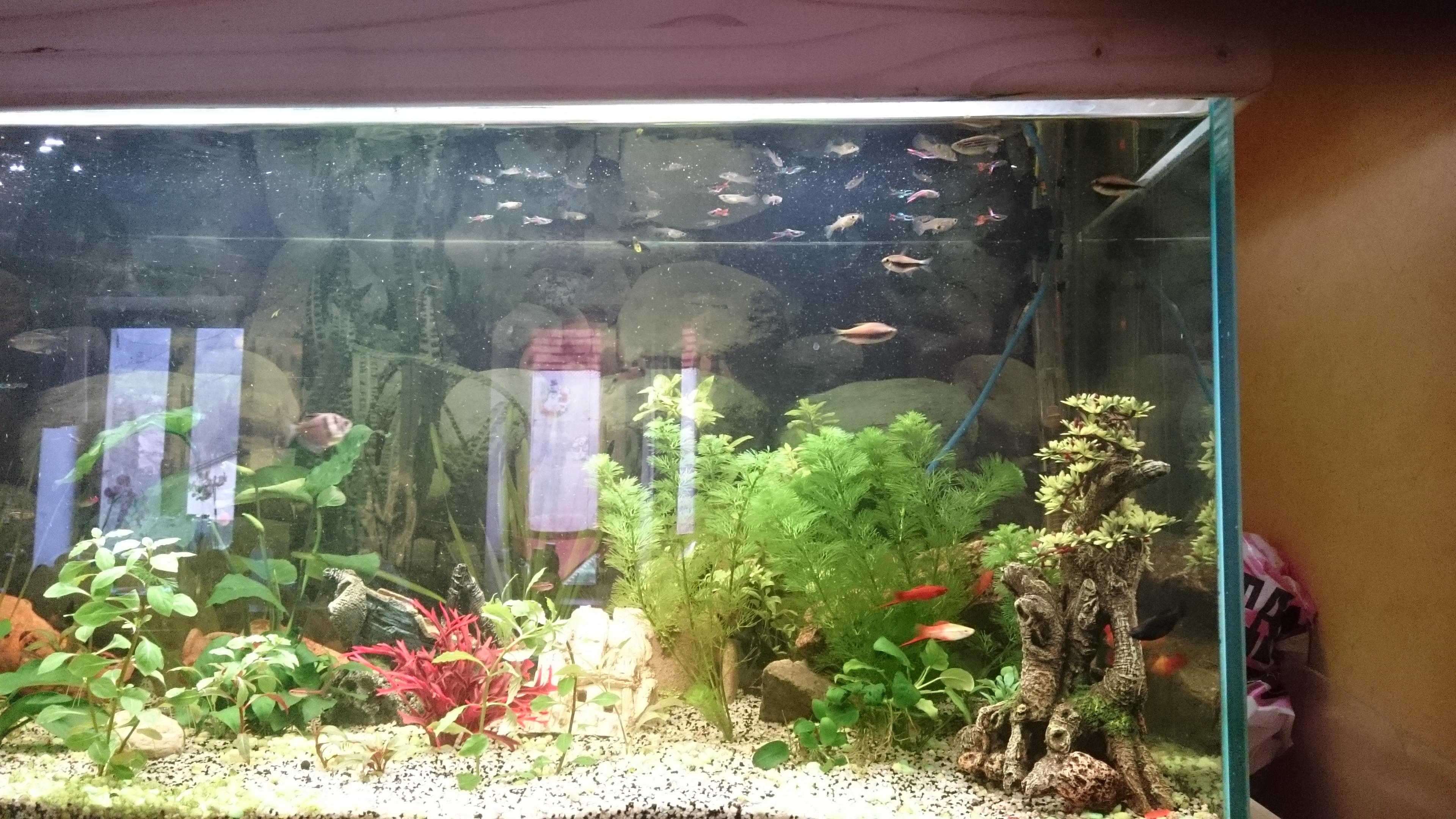 http://kimikooo.free.fr/Aquarium/DSC_0304.JPG
