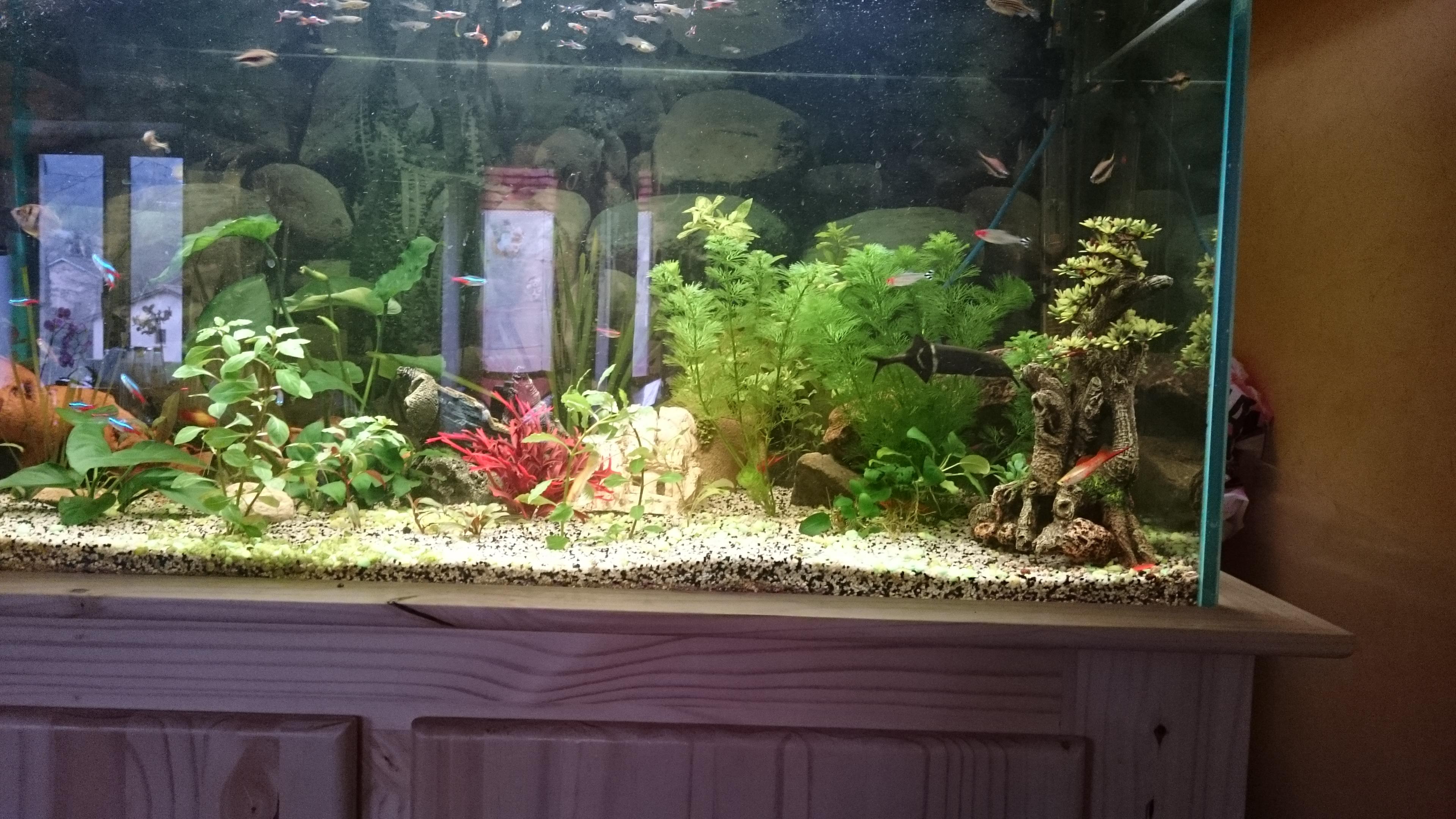 http://kimikooo.free.fr/Aquarium/DSC_0307.JPG